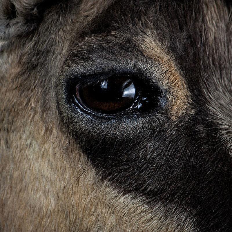 Close Up vom Auge